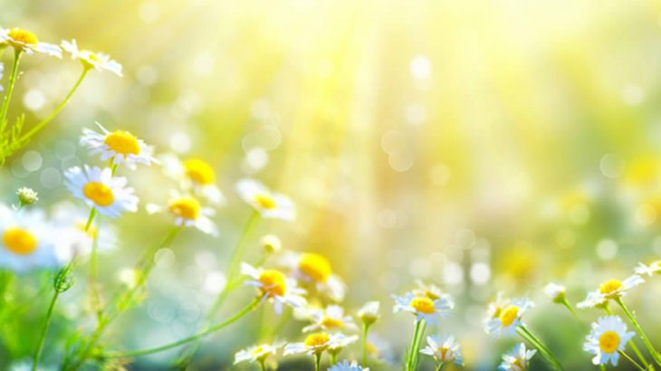Septiembre - bajo el sol de la primavera